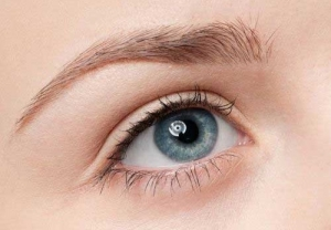 zone sourcils BIOTIC Phocea